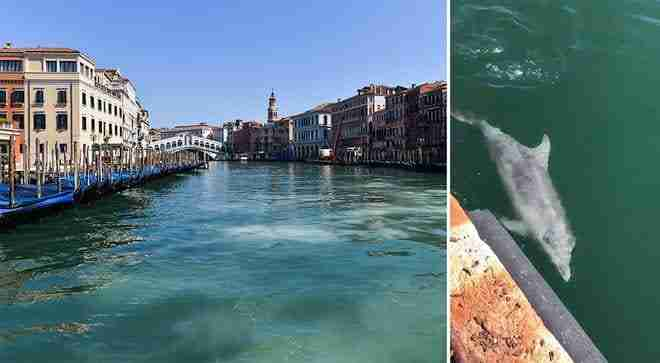 a dolphin appears in a Venetian canal