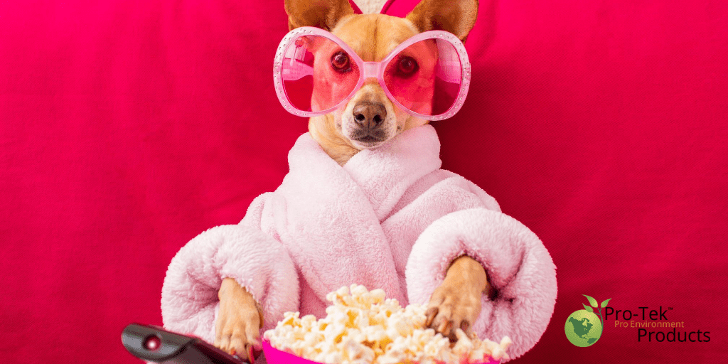 Best Netflix Nature Picks to Get Your Mind Off the C-Word